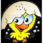 Chicken Hatched Egg